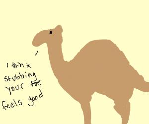 Weird camel
