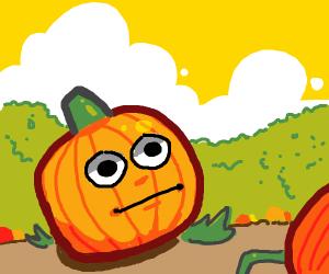 confused pumpkin