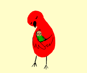 red bird carries baby