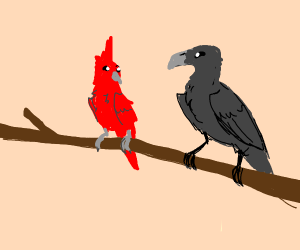 Cardinal and Raven eyeball one another