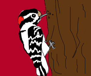closeup of a cute woodpecker in action