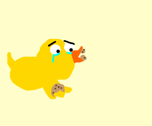 Duck sadly eats a cookie