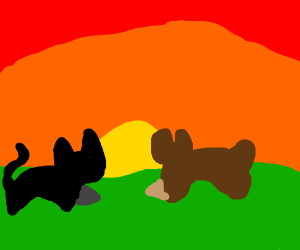A Cat and a Dog shake hands at sunset