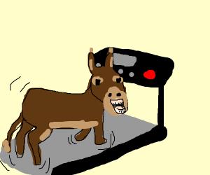 Donkey running fast?
