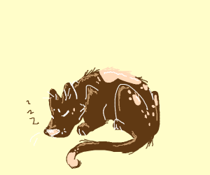Sleeping cat-dog
