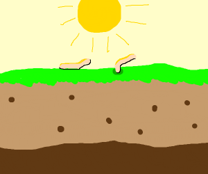 Sun shines over worms