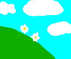 Pretty flowers under a cloudy sky