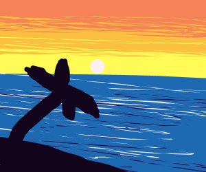 Palm tree's shade at sunset