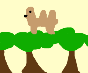 Camel in the Tree Tops