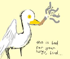 Bird Smokes
