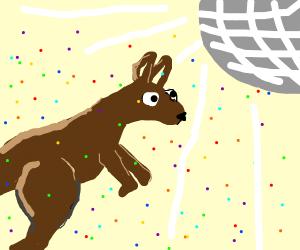Disco kangaroo