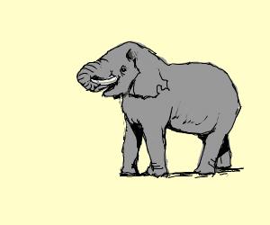 Elephant Strolling