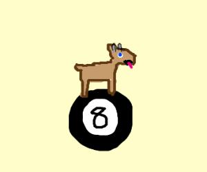 Goat on an 8 ball