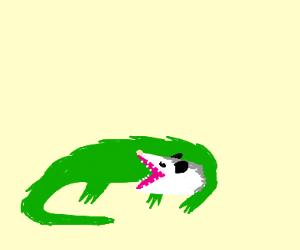 Alligator with a possum head