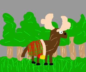 Moose in a kilt