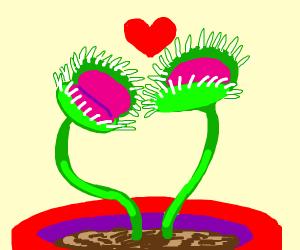 venus flytrap love
