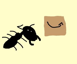 Amazon for ants