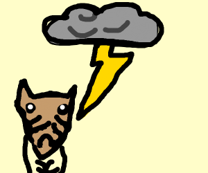 a very sad raccoon in a thunderstorm