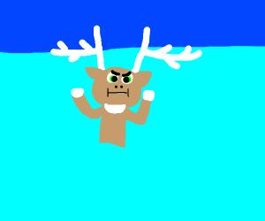 deer shrugging in the water