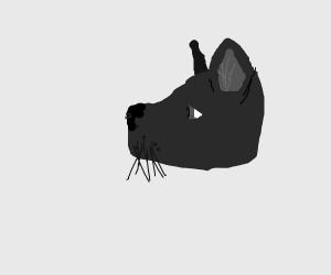 Cool cat headshot
