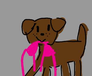 dog sucking on a binki