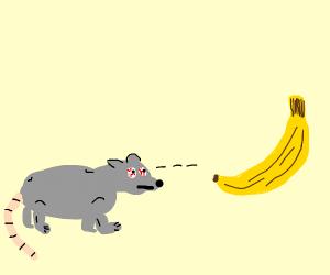 mouse staring at a banana