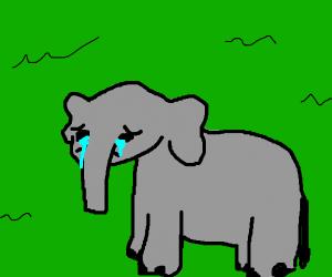 depressed elephant