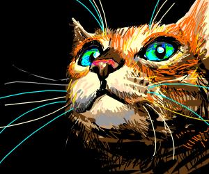 Orange cat with blue eyes in darkness