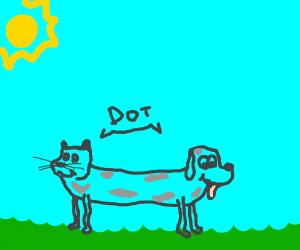 """Cat and dog hybrid named ,,Dot"""""""