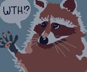 Raccoon saying wth