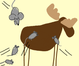 Rats attacking a moose