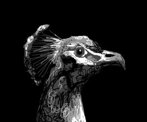 1950's Peacock