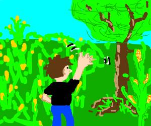 Black man shirt: corn field, waving at tree