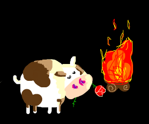 cow loves fire