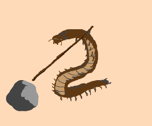 centipede pokes rock with a stick