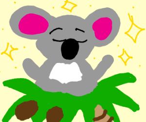 koala meditating in tree