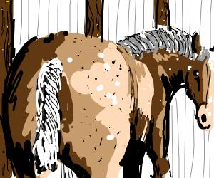horse butt