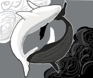 yin-yang whales