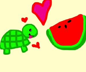 Turtle loves watermelon