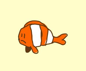 Sad clown fish