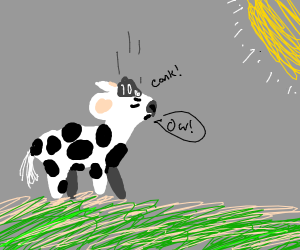 Moo cow has been conked on the noggin