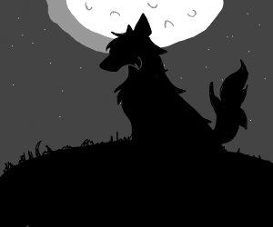 Wolf silhouetted by beautiful night sky
