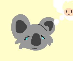 Koala cries about Jazza