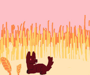 Dog in a field of wheat