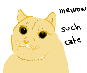 doge if he was a cat