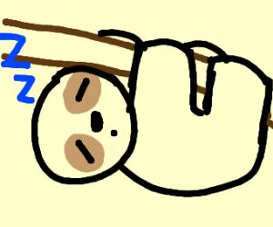sleeping sloth who is hanging