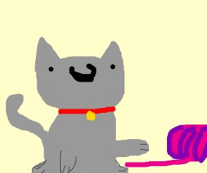 Cat playing with big Yarn