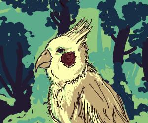 Cute Cockatiel
