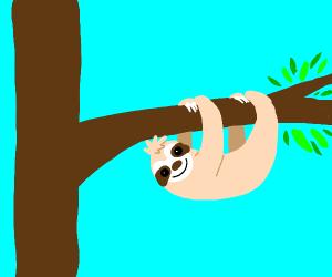 a sloth on a tree