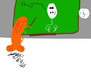 Shrimp teaches biology class